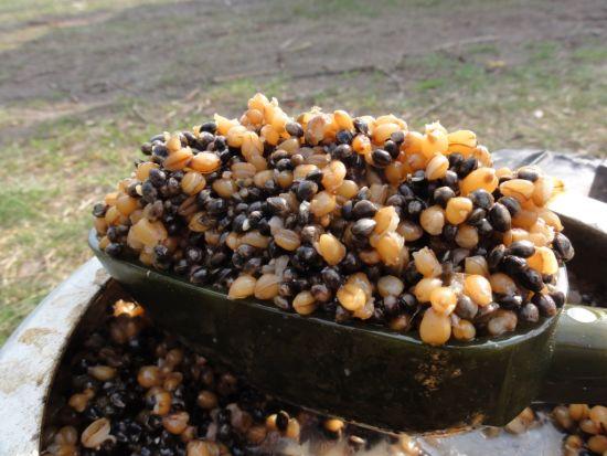 Gotowana w szybkowarze konopie + pszenica – idealne i aromatyczne!